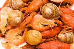 Fond de fruits de mer Image libre de droits