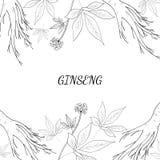 Fond 1 de ginseng Photo stock