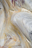 Fond de grès Image stock