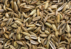 Fond de graine de fenouil Photo libre de droits
