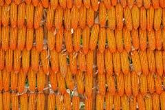 Fond de graine de maïs Photographie stock