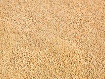 Fond de graine de soja image libre de droits