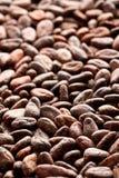 Fond de graines de cacao photographie stock