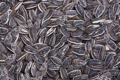 Fond de graines de tournesol Photo libre de droits