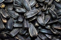 Fond de graines de tournesol Fin vers le haut Foyer sélectif Photos libres de droits