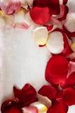 Fond de grunge de pétales de Rose Photographie stock libre de droits