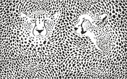 Fond de guépards avec des têtes Images libres de droits
