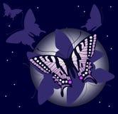 Fond de guindineau de nuit Images stock