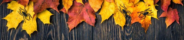 Fond de Halloween avec des feuilles et des araignées d'érable photos libres de droits