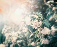 Fond de jardin de fleurs d'été avec l'éclairage de coucher du soleil Image stock
