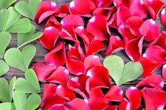Fond de jour de valentines : Feuilles en forme de coeur et pétales de rose rouges Photos libres de droits
