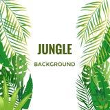 Fond de jungle Arbres et centrales de jungle illustration libre de droits