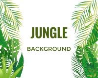 Fond de jungle Arbres et centrales de jungle illustration de vecteur