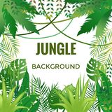 Fond de jungle Arbres et centrales Illustration de vecteur illustration de vecteur