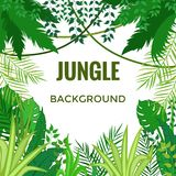 Fond de jungle Arbres et centrales Illustration de vecteur illustration libre de droits