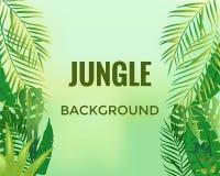 Fond de jungle Arbres et centrales Illustration de vecteur illustration stock