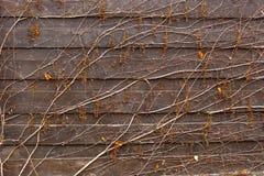 Fond de l'élevage de vin sur la barrière en bois Photo libre de droits