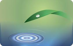 Fond de l'eau et d'herbe Photographie stock libre de droits