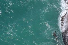 Fond de l'eau de mer de sarcelle d'hiver avec le joint de fourrure du côté droit photo libre de droits