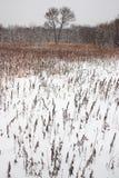 Fond de l'hiver Photos stock