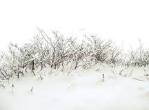 Fond de l'hiver avec le buisson neigeux Images stock