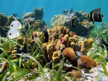 Fond de la mer avec l'éponge de tube Image stock