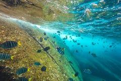 Fond de la mer d'îles de Similan Photographie stock