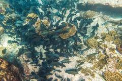 Fond de la mer d'îles de Similan Photos libres de droits