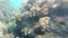 Fond de la mer en mer avec de l'eau l'algue et bleu banque de vidéos