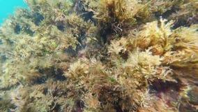 Fond de la mer en mer avec de l'eau l'algue et bleu sur la caméra d'action avec les yeux d'un plongeur clips vidéos