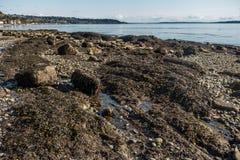 Fond de la mer indiqué photo stock