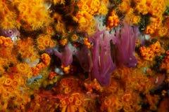 Fond de la mer méditerranéen Photos libres de droits