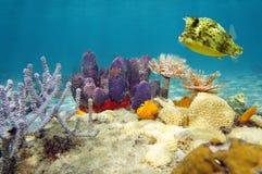 Fond de la mer sous-marin coloré d'espèce marine Photos libres de droits