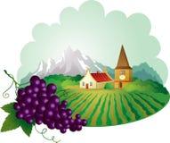 Fond de la Provence avec du raisin Photos stock
