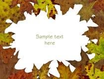 Fond de lame d'arbre d'automne Images libres de droits