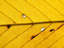 Fond de lame d'automne Photo libre de droits