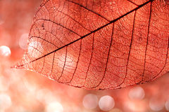 Fond de lame d'automne Photo stock