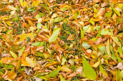 Fond de lames d'automne Photographie stock libre de droits