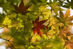 Fond de feuilles d'automne photos stock