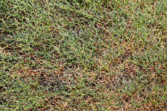 Fond de lichen Image libre de droits