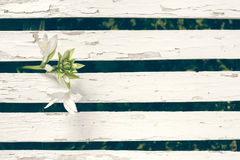 Fond de Lily Over White Wooden Fence de jardin Photos libres de droits