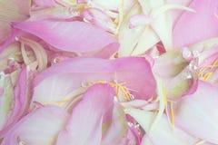 Fond de lotus de pétale Photographie stock libre de droits