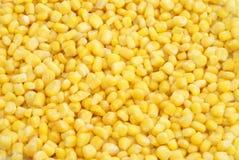Fond de maïs Photos stock