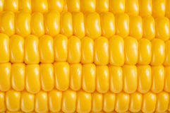 Fond de maïs, macro plan rapproché Photo stock