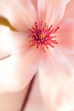 Fond de magnolia photos libres de droits