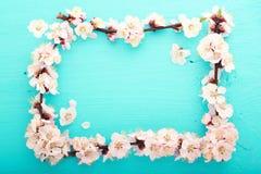 Fond de mariage Branchement fleurissant de cerise Photo stock