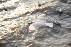 Fond de mer de mouette Image libre de droits