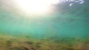 Fond de mer et d'océan clips vidéos