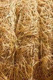 Fond de meules de foin de blé. Photos libres de droits