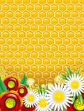Fond de miel Photographie stock libre de droits